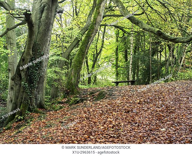 Autumn Colours in Birk Wood Harrogate Yorkshire England