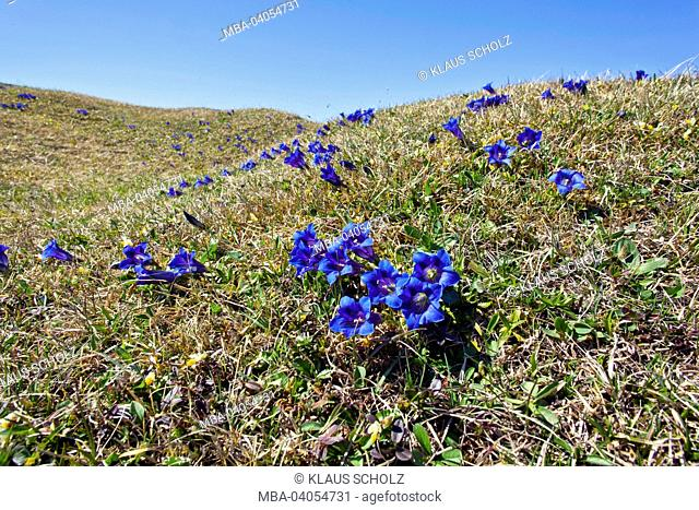 Buckelwiesen' (hummocky meadows) with gentian
