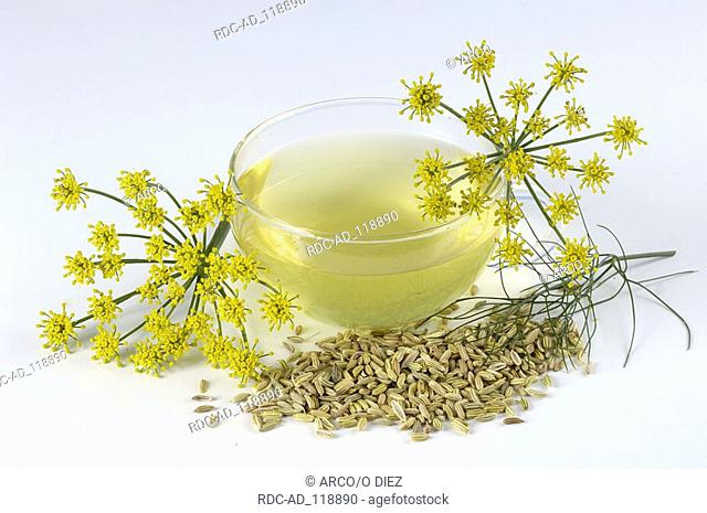 Fennel cup of Fennel tea dried seed and blossoms Foeniculum vulgare