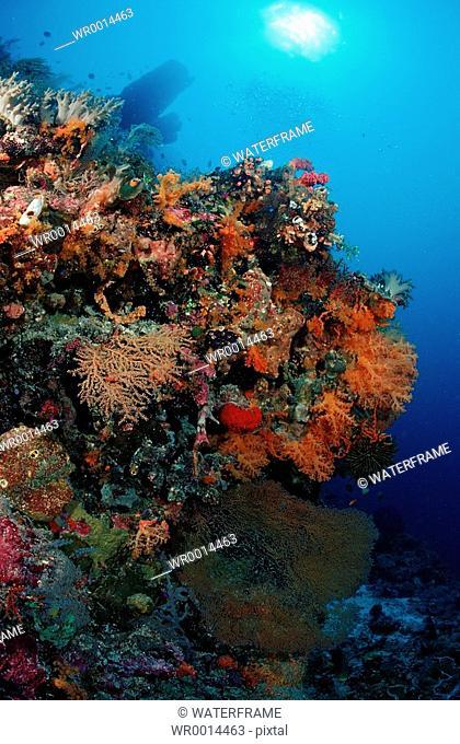 Colorful Coral Reef, Komodo National Park, Indian Ocean, Indonesia