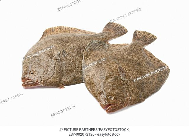 Pair of fresh Turbot fishes on white background