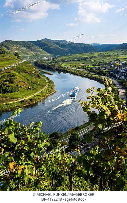 Cruise ship at the Moselle river bend near Bremm, seen through the vineyards, Moselle Valley, Rhineland-Palatinate, Germany