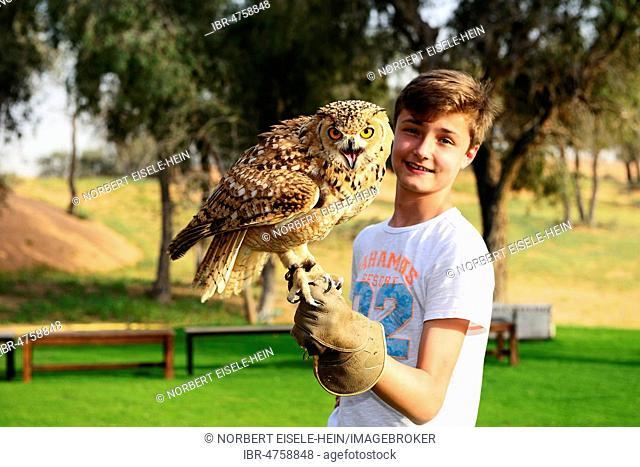 Youth stops Eagle Owl at Falconer Show at Al Wadi Desert Hotel, Ritz Carlton, Ras al Khaimah, United Arab Emirates