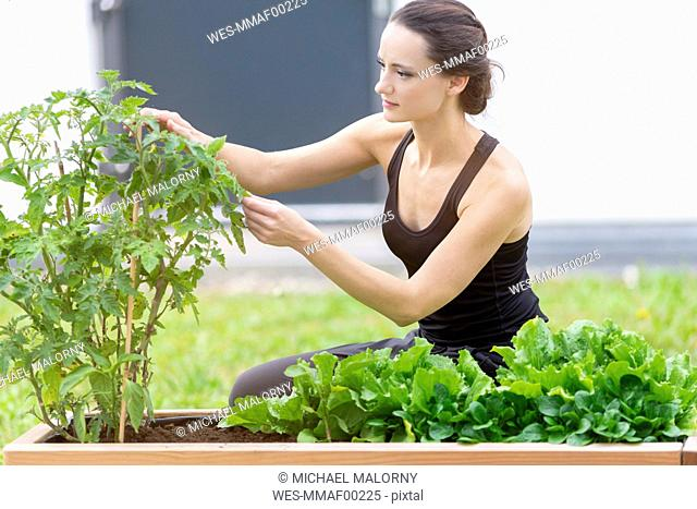 Young woman harvesting, bed with salad and herbs in garden