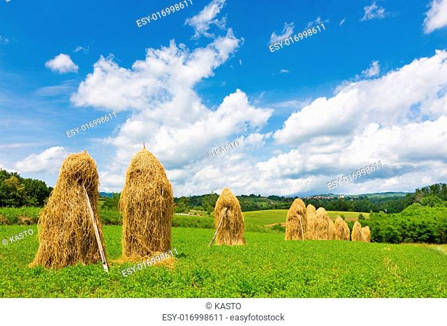Bela krajina, Slovenia. Traditional hay stacks on the field