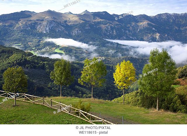 Ash row in autumn  Aralar range  Pass of Azpiroz  Navarre  Basque Country  Spain