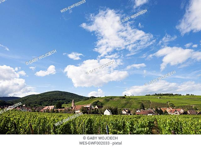 France, View of vineyards at Riquewihr