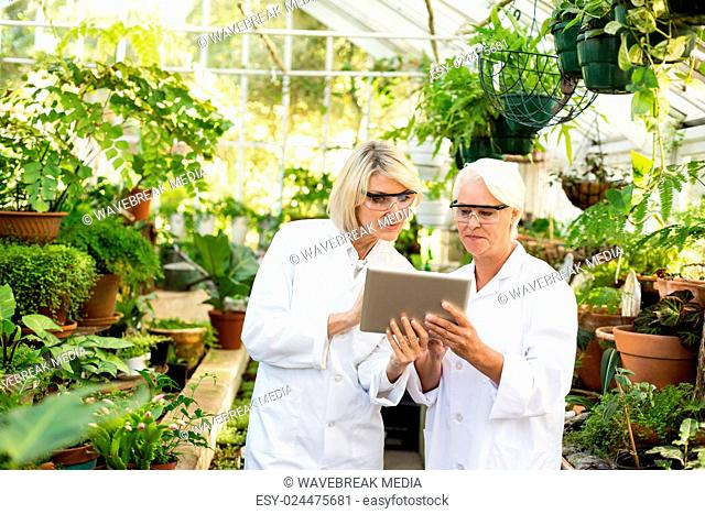 Scientists discussing over digital tablet at greenhouse