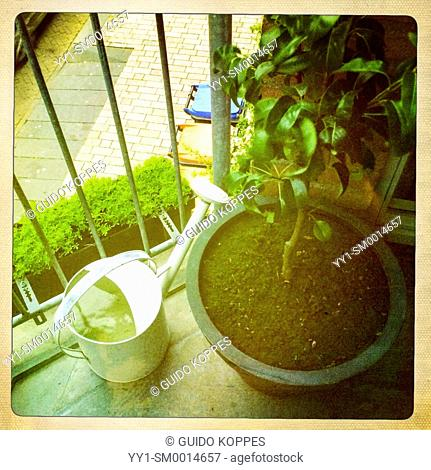 Tilburg, Netherlands. Hipstametic. A pot with a small pear tree on an balcony during summer
