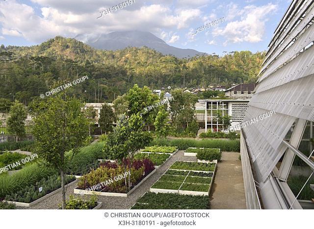 Rumah Atsiri's gardens with Lawu Volcano Mountain in the background, Tawangmangu area, Karanganyar district, near Surakarta (Solo), Java island, Indonesia