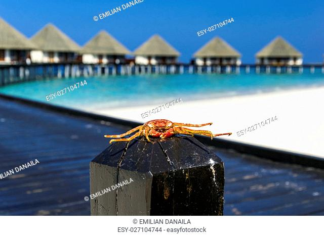 Daylight scene with a funny looking crab sitting on a wooden pile in front of a black bridge, water villas, blue sky and turquoise water