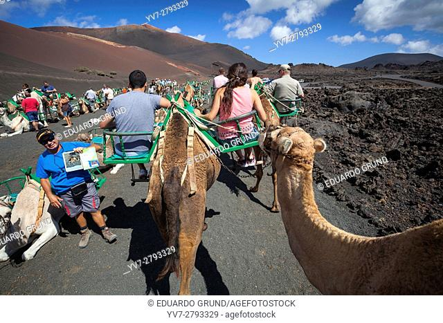 Walk to Camel on the slopes of the Mountain of Fire in Timanfaya. It is undoubtedly one of the most well-known tourist attractions on the island of Lanzarote