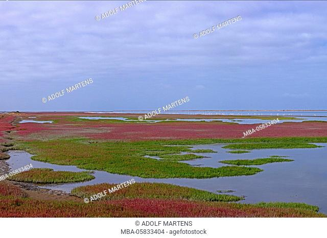 Lagoon Walvis Bay with flood, coloured growth, flamingos, Namibia