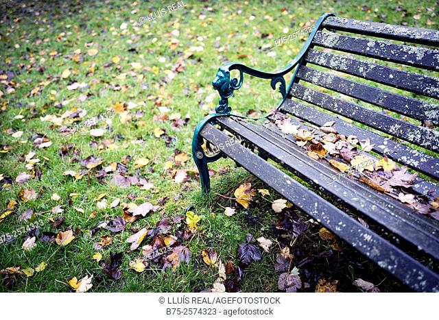Closeup of a garden bench, in autumn with leaves. Arncliffe, Yorkshire Dales, North Yorkshire, England, UK