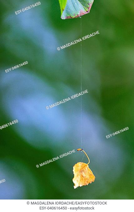 Single leaf hanging on spiderweb in a forest
