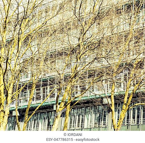 post card view: european city street with spring tree on building facade close up