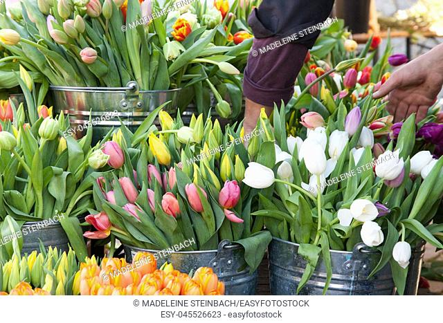 Colorful tulips on display at the farmers market in spring