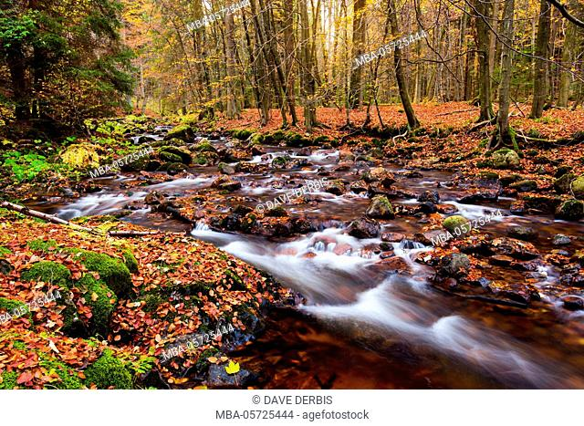 Forest, autumn, river, Kalte Bode, Elendstal, Harz, Germany