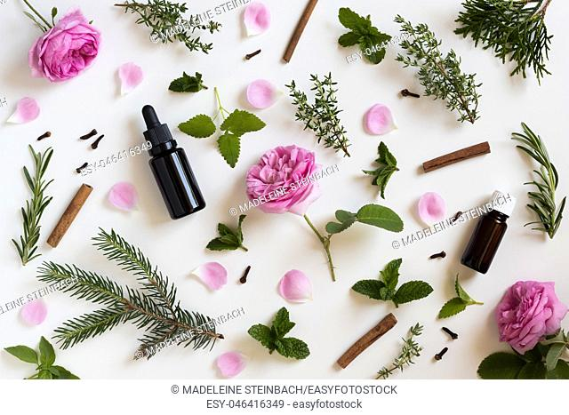 Selection of essential oils and herbs on a white background - peppermint, rose, melissa, thyme, rosemary, cinnamon, clover, thuja