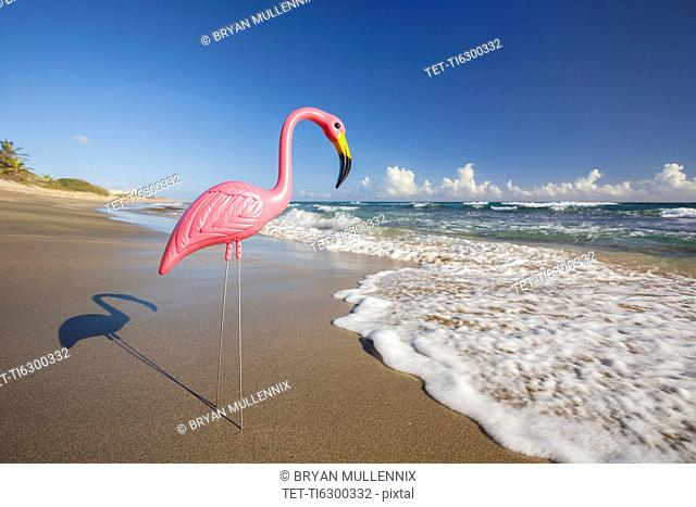 Plastic Flamingo on Isabel Beach