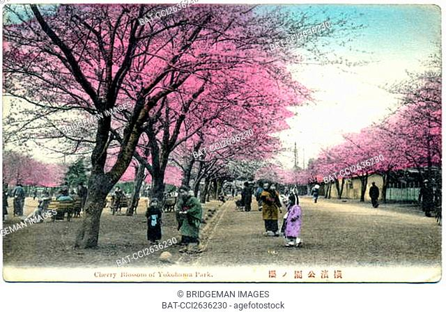 Geography. Japan, Yokohama: Cherry Blossoms in a Park. Postcard, Japan, c.1920. / Private Collection / Photo © CCI / Bridgeman Images