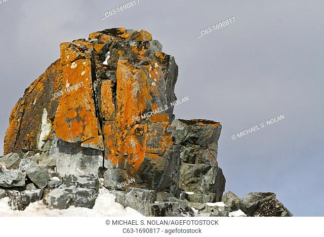 View of lichen covered rocks on Half Moon Island in the South Shetland Group, Antarctica, Southern Ocean