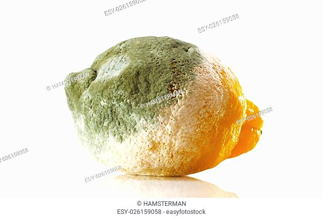 Rotten lemon covered with mold over white background