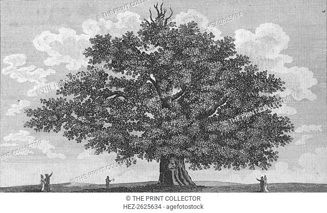 'The Penshurst Oak', 1794. Artist: Unknown