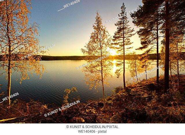 The setting sun illuminates the trees lining the shore of a quiet lake in southern Lapland with a golden shine
