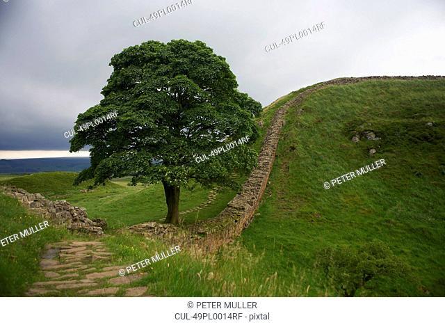 Stone walls in rural field