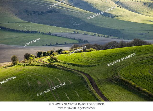Early spring in South Downs National Park, East Sussex, England