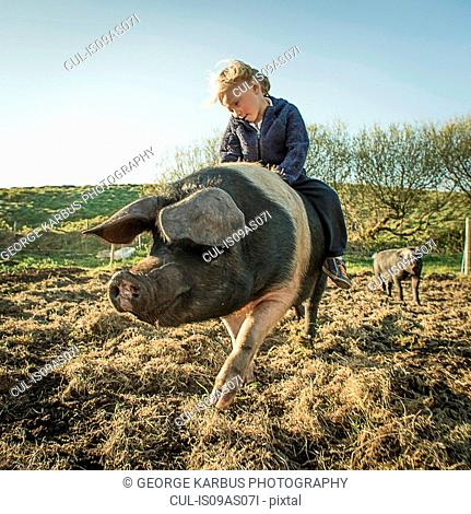 Young boy riding large pig