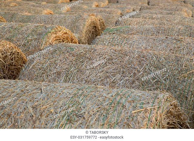 Straw bales on a farmland in central Europe