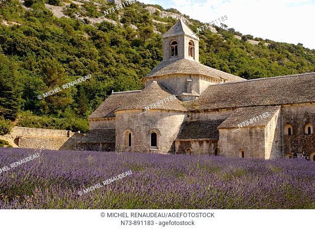 Senanque Abbey and lavender field, Vaucluse, Provence-Alpes-Côte d'Azur, France