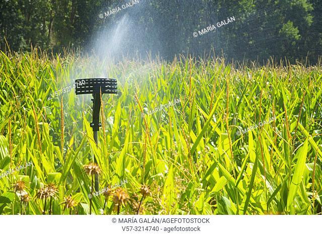 Irrigation system in corn field