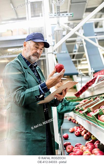 Manager with clipboard inspecting red apples in food processing plant