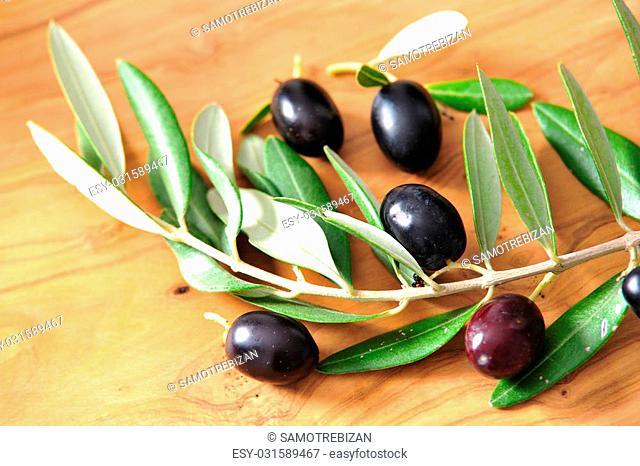 olive branch with black olives