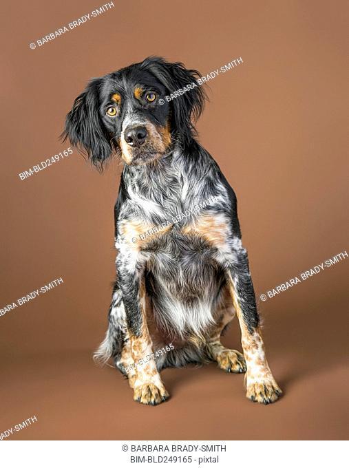 Portrait of sitting dog