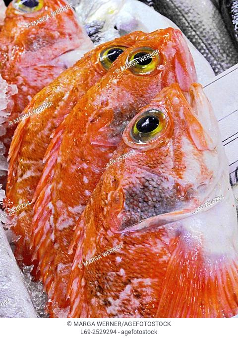 Fish displayed in the market hall of Ericeira, Region Centro, District Lisbon, Portugal, Europe