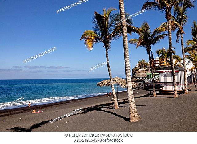 coconut trees on the black beach in Puerto Naos, La Palma, Canary Islands, Spain, Europe