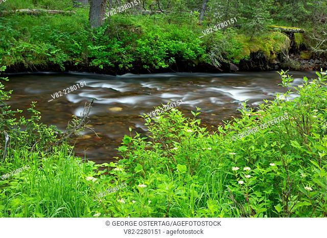 Swan Creek along Swan Creek Trail, Gallatin National Forest, Montana