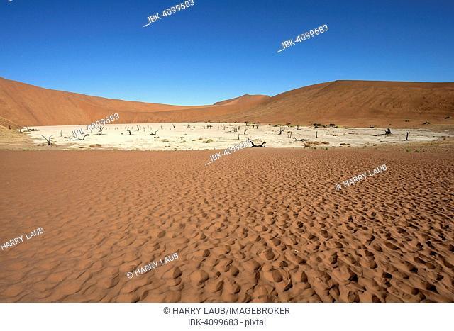 Sand dunes, dead Camel thorn trees (Vachellia erioloba), salt and clay pan, Dead Vlei, Sossusvlei, Namib Desert, Namib-Naukluft National Park, Namibia