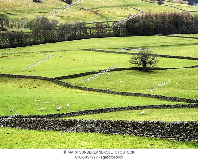 Dry Stone Walls in Nidderdale from Wath Road near Pateley Bridge North Yorkshire England