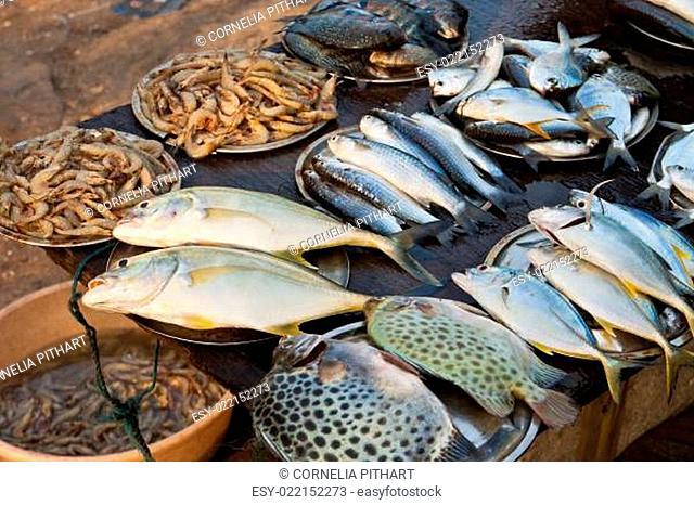 Fischmarkt in Kerala, Indien