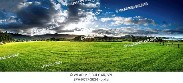 Green field, New Zealand