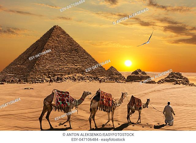 The Pyramid of Menkaure and the three pyramid companions, the camels and the bedouins in the desert