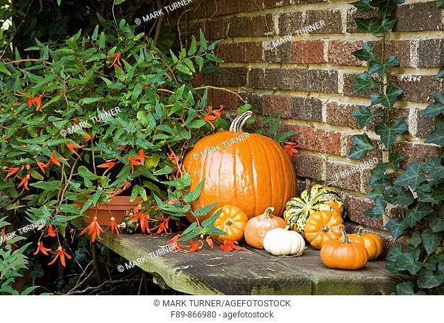 Large & miniature pumpkins as decoration on shelf against brick wall