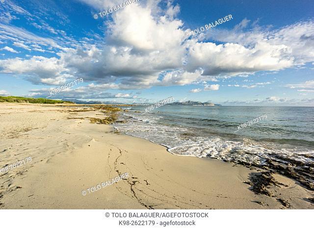 playa de Es Dolç, Son Real, bahia de Alcudia, Santa Margarida, Majorca, Balearic Islands, Spain