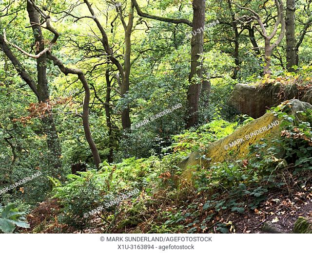Early autumn trees and lichen covered boulders in early autumn at Shipley Glen near Baildon West Yorkshire England