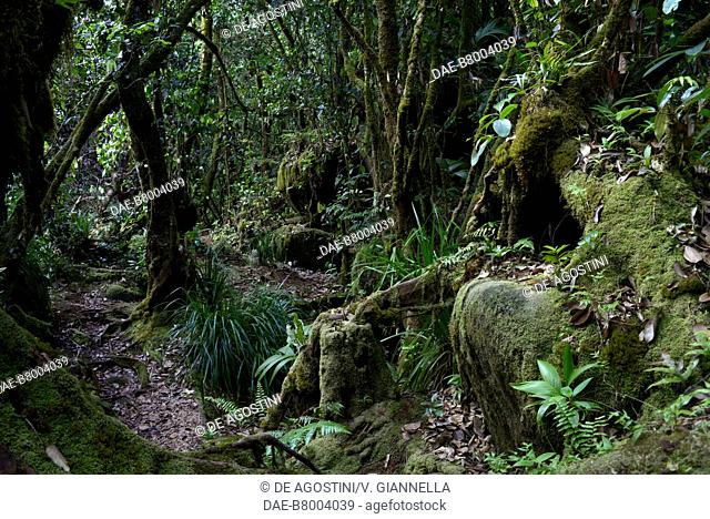 Rainforest in Morne Seychellois national park, Mahe island, Seychelles